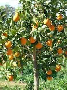 oranger le clos Landar l'arbresle philippedelyon.fr